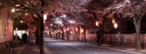 TOPスライドショー桜