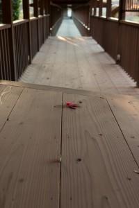 本土寺 廊下 紅葉