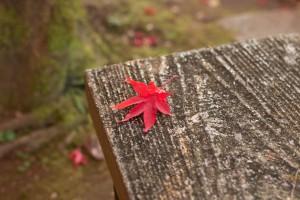 本土寺 椅子 紅葉