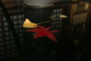 本土寺 水に浮かぶ紅葉