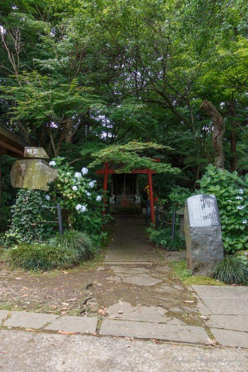 本土寺 稲荷様と紫陽花