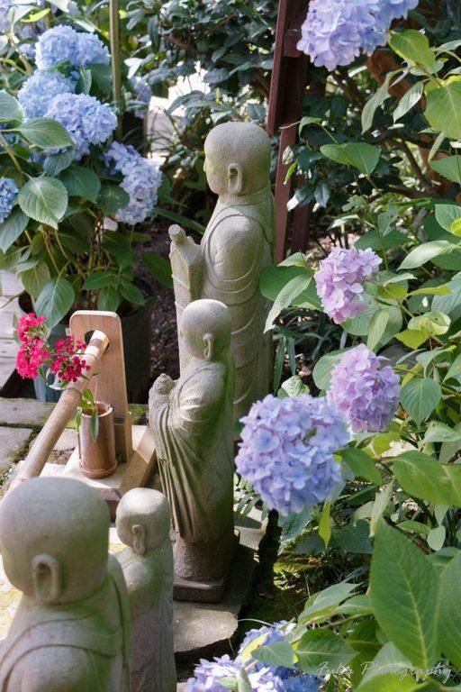 明月院 地蔵 紫陽花