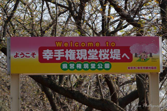 県営権現堂公園 第14回 曼珠沙華まつり 彼岸花