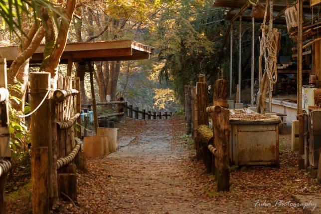 養老渓谷 中瀬キャンプ場