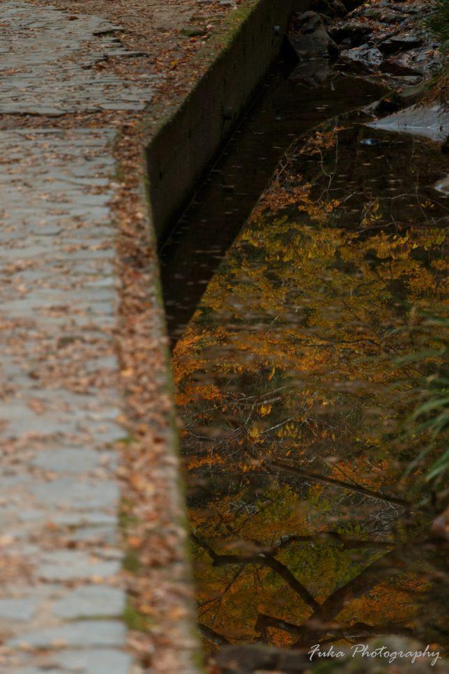 養老渓谷 滝めぐり遊歩道