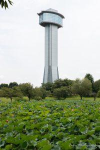 古代蓮の里 古代蓮会館タワーと蓮