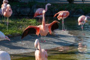 東武動物公園 コフラミンゴ